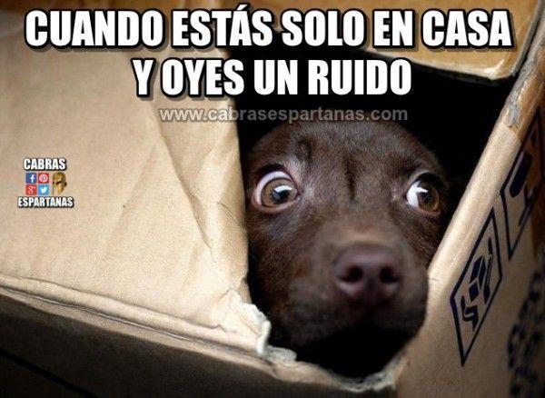 Imagenes Y Memes De Humor Memes Divertidos Imagenes Graciosas Y