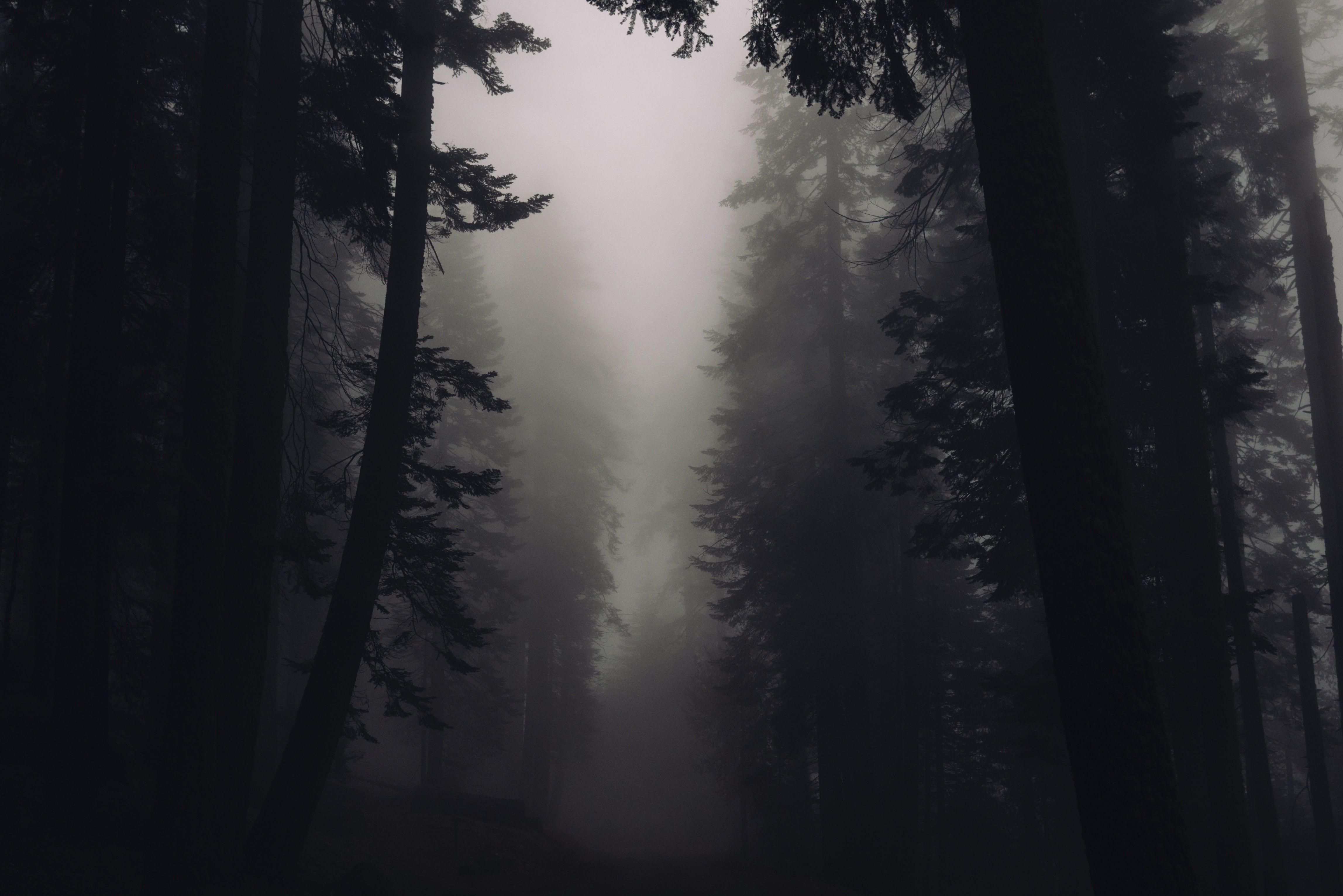 blackandwhite creepy dark eerie Fog Foggy Forest