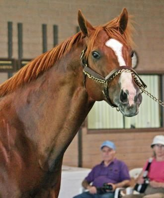 Lucky Pulpit, sire of California Chrome, dies at 16 | Daily