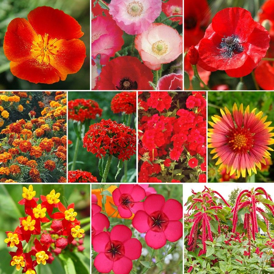 Red Head Exclusive Red Wildflower Seed Mix Flower Seeds Packets Flower Seeds Online Flower Seeds