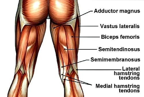 Pin By Kho Health On Hamstring Tendon Anatomy Symptoms And