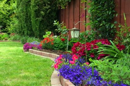 What I'd like to do around the back fence. Want some trees or shrubs for height.
