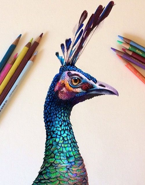 Illustrator Morgan Davidson Color Pencil Art Color Pencil