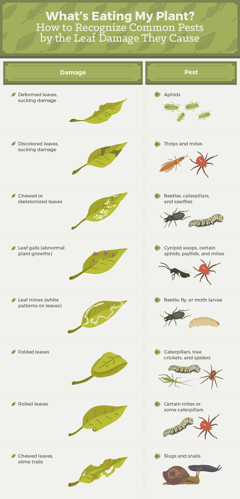 How To Get Rid Of Bugs Eating My Rose Leaves