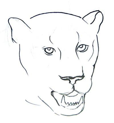step by step lesson how to draw a panther head and face