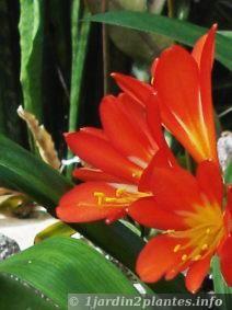 plante verte qui fleurit
