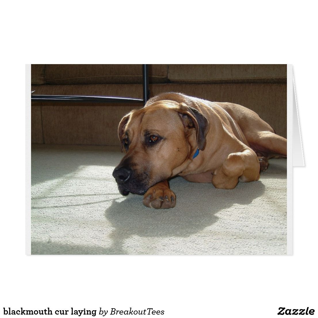 blackmouth cur laying Black mouth cur