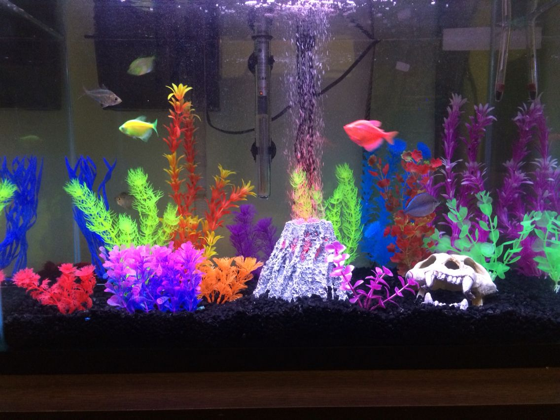 my 20 gallon glofish tank fish tank ideas fish tank