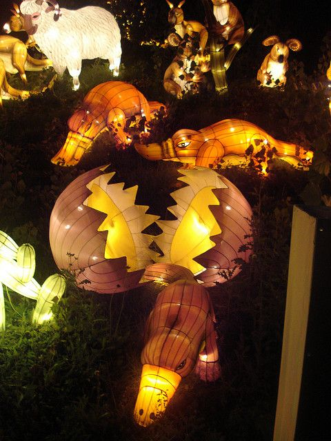 Solstice With Ice Lantern And Umbrella >> Platypus Lantern Adventures Far Lanterns Lantern Festival