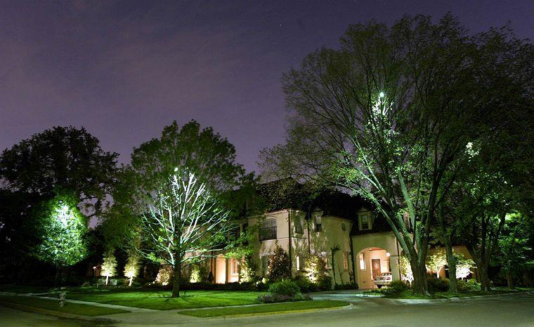 Moonlighting Tree Lighting Landscape Lighting Outdoor