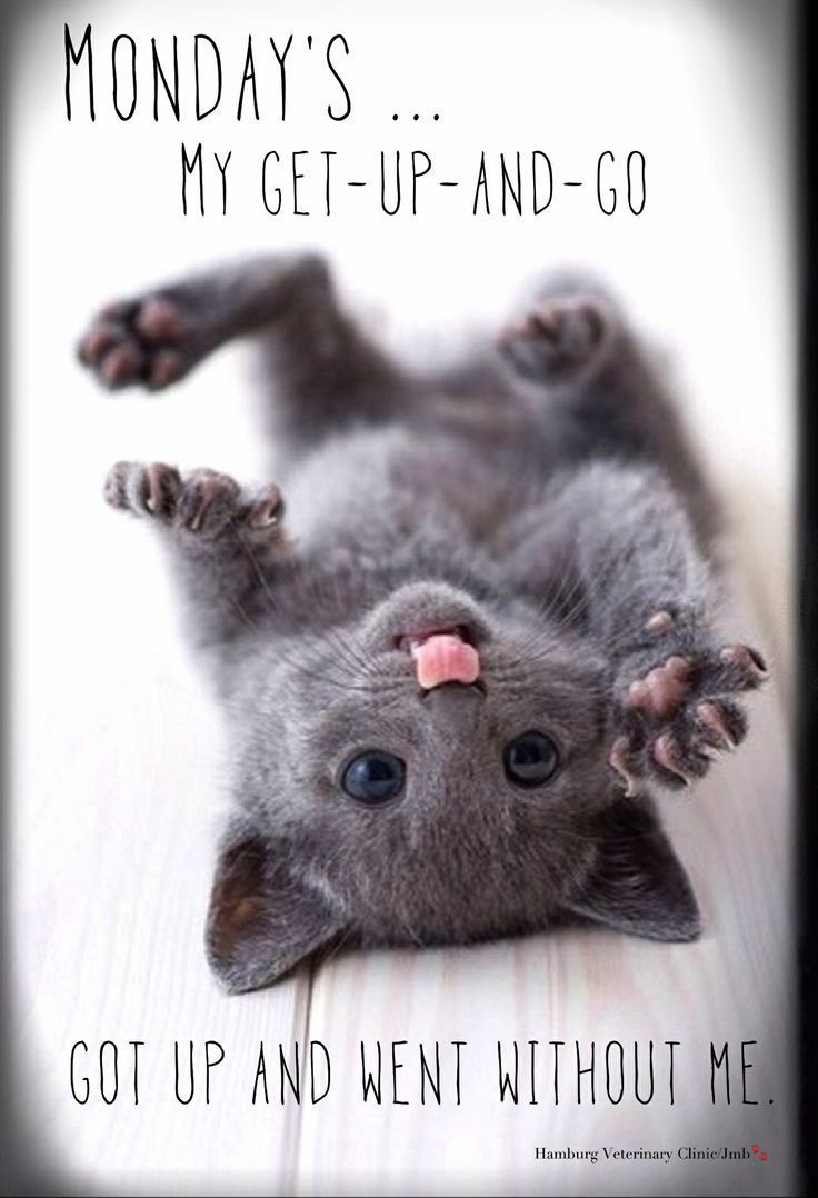 Funny Monday Quotes Cats and kittens, Cute baby animals