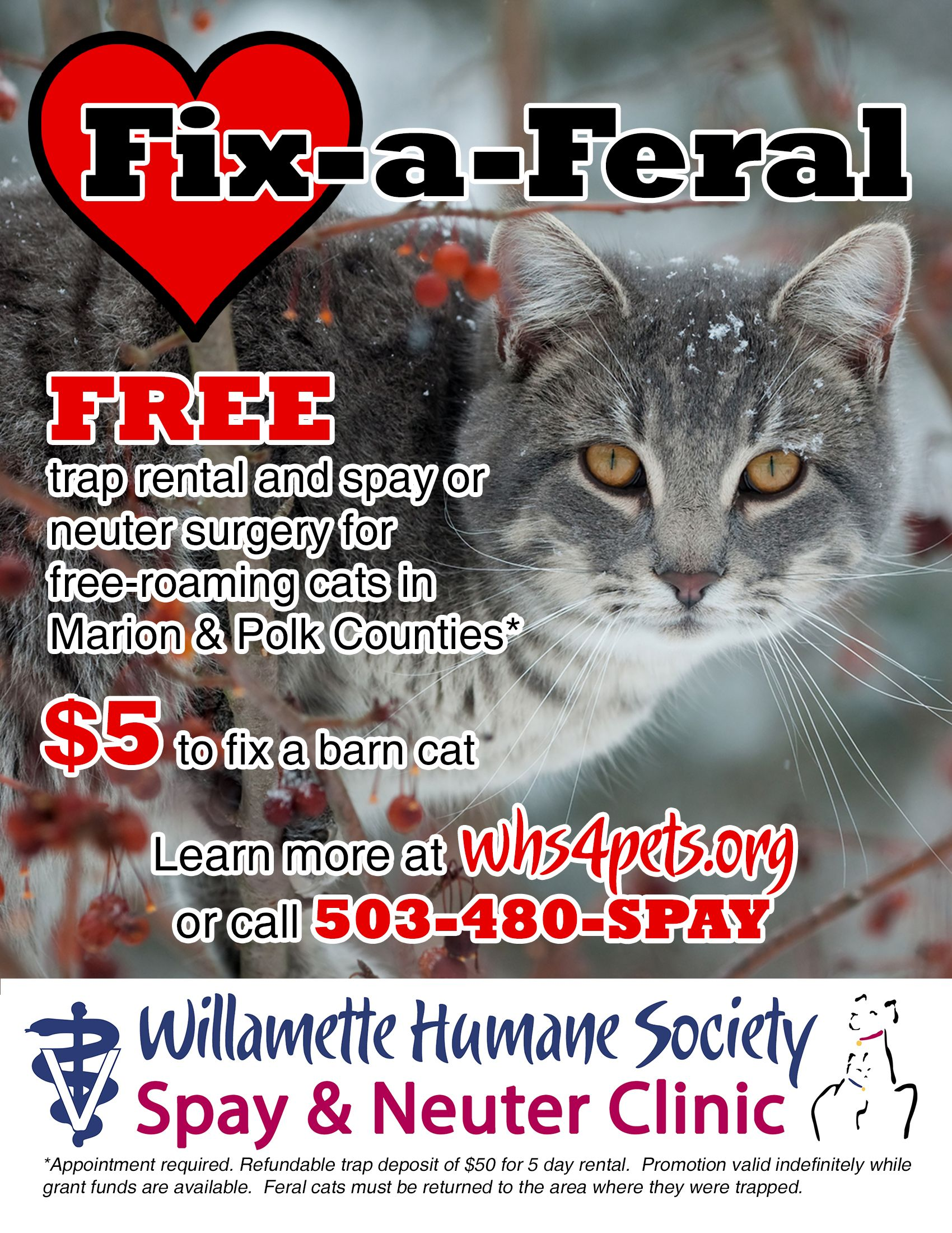 Free trap use and spay or neuter surgery for freeroaming