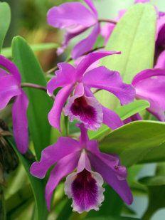 La Orquídea Es La Flor Más Hermosa Del Mundo Orchids Flowers Plants