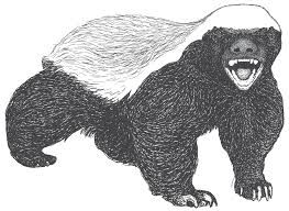 Image Result For Honey Badger Honey Badger Honey Badger Tattoo Badger