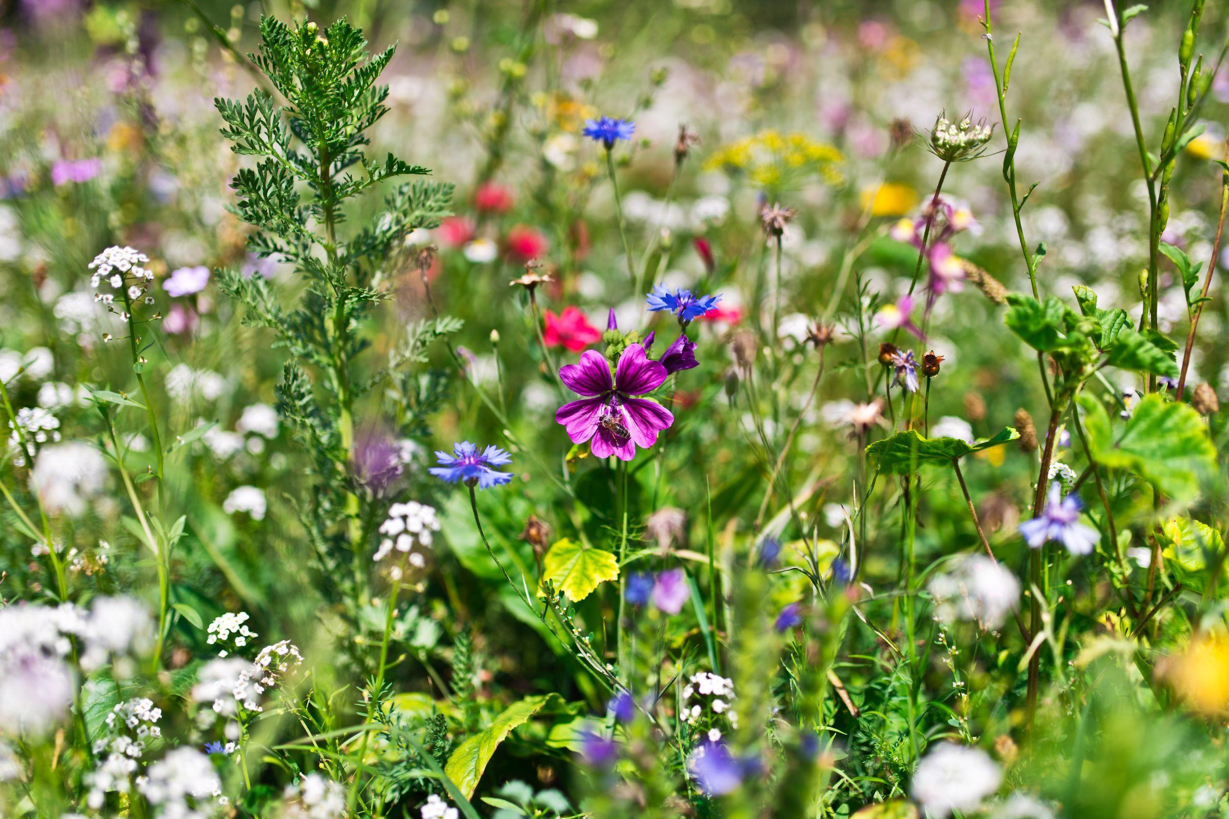 Laka W Wielkim Miescie Plants Flowers