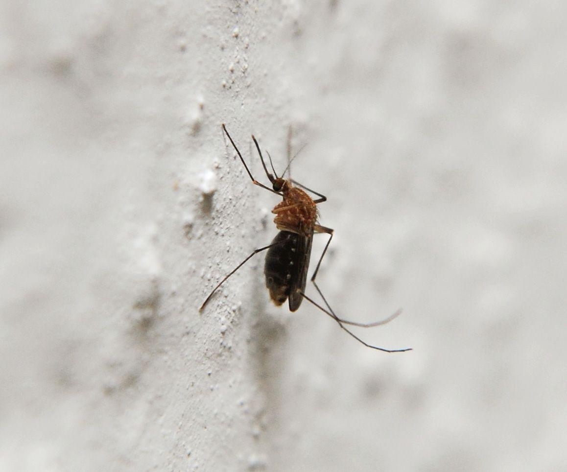 5 rem des naturels anti moustiques vraiment efficaces. Black Bedroom Furniture Sets. Home Design Ideas