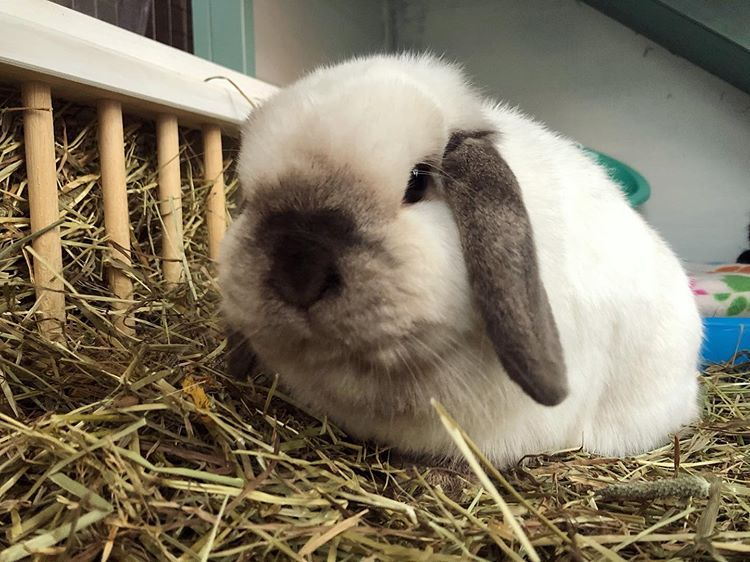 Hoppy Wednesday Every Bunny H D Bunny Rabbit Ukbunnies Hoppy Wednesday Every Bunny H D Bunny R Crazy Bunny Lady Bunny Lovers Bunny House