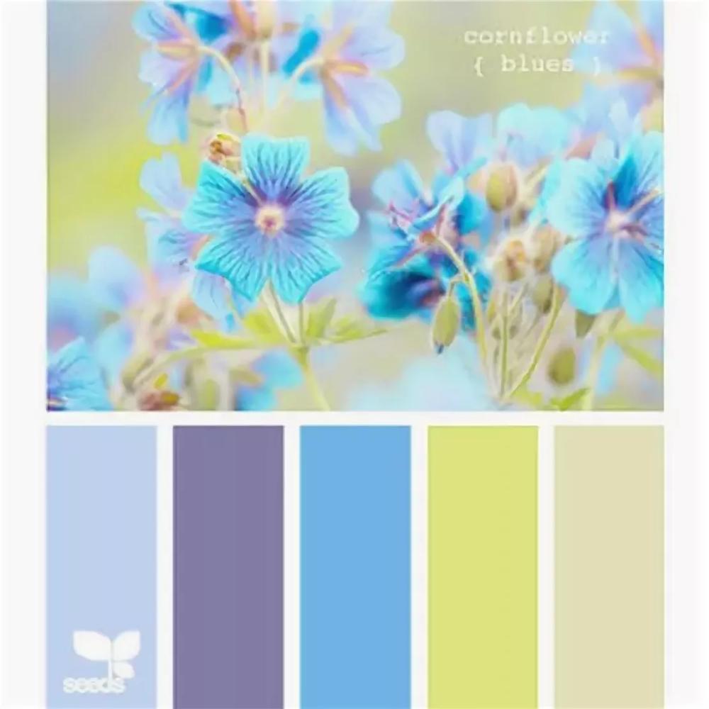 сочетание нежно голубого цвета с другими цветами: 6 тыс