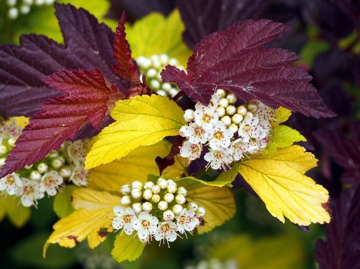 13 Best Shrubs for Full Sun in 2020 | Full sun shrubs ...