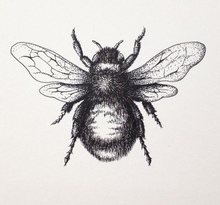 Afbeeldingsresultaat voor bee drawing   Art   Pinterest ...