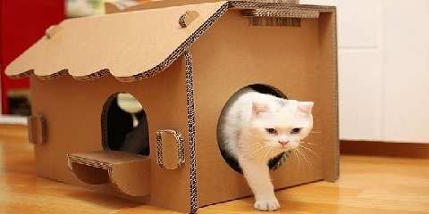 Cara membuat rumah kucing dari kardus. Tips bikin tempat ...