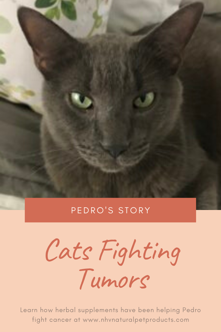 Helping Pedro Fight His Tumors Naturally In 2020 Cats Cancer Story Tumor