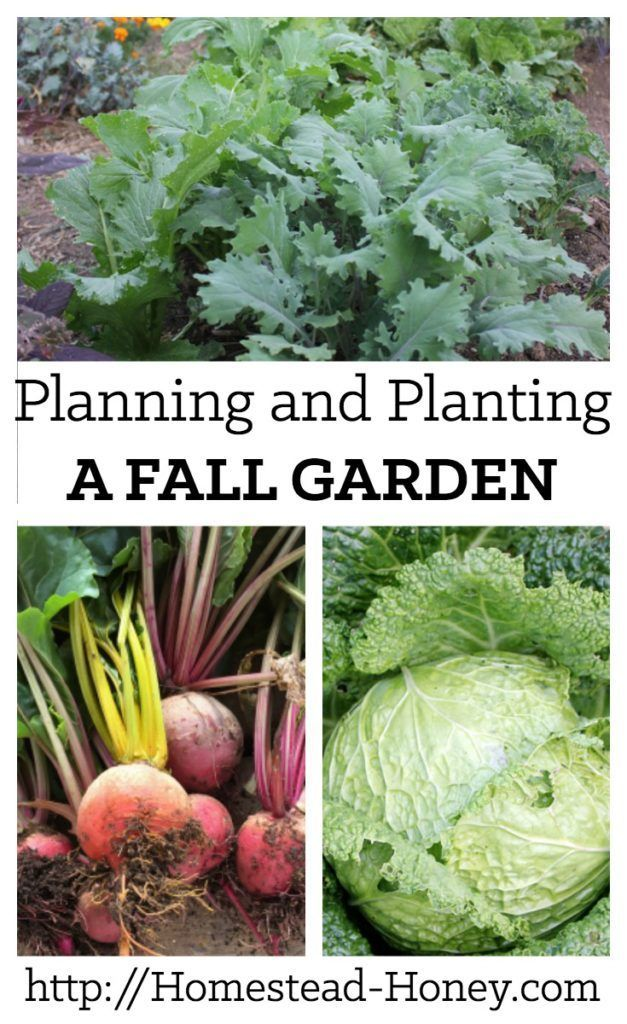 Planning and Planting a Fall Garden | Plants, Late summer and Homesteads