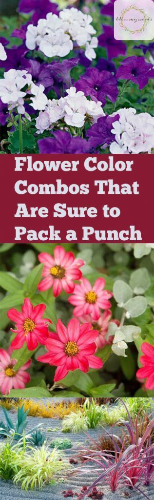Colorful Flower Combinations, Flower Combos, Gardening Landscaping, How To  Landscape, Landscaping Tips For Beginners, Gardening, Gardening Hacks, ...