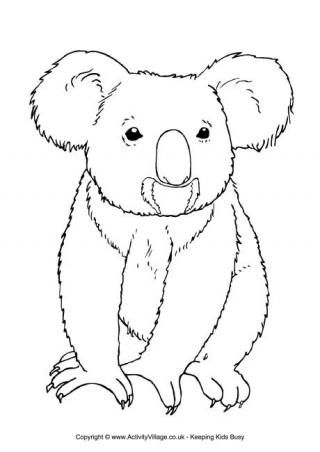 Australian Animal Colouring Pages Koala Drawing Animal Coloring Pages Bear Coloring Pages