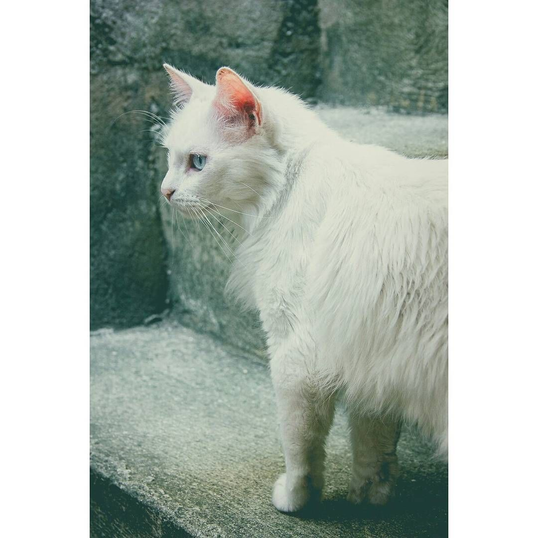 Gluttony 2/2 :: Projeto Xerimbabo ~  #petphotography #fotografiapet #pet #animal #animaux #bicho #amobicho #bichano #gato #mãedegato #horadogato #gatosbrasil #loucadosgatos #instagato #gatto #chat #neko #nekostragam #cat #catlovers #catsofinstagram #instacat #caterday #lovecats #meowmeow #canon #canonbr #135mm #xerimbaboproject