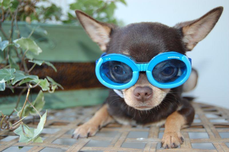 Make Fun Of My Doggles I Dare You Looks Like My Little Man