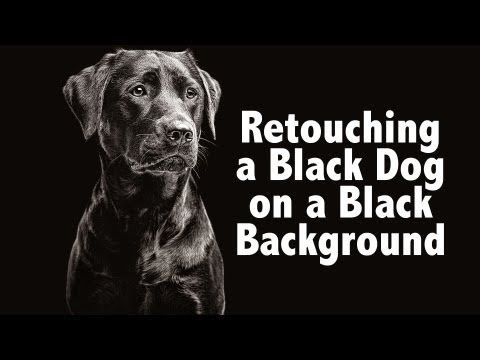 Photoshop Technique For Black Dog On Black Background Youtube Black Backgrounds Black Dog Dog Photography