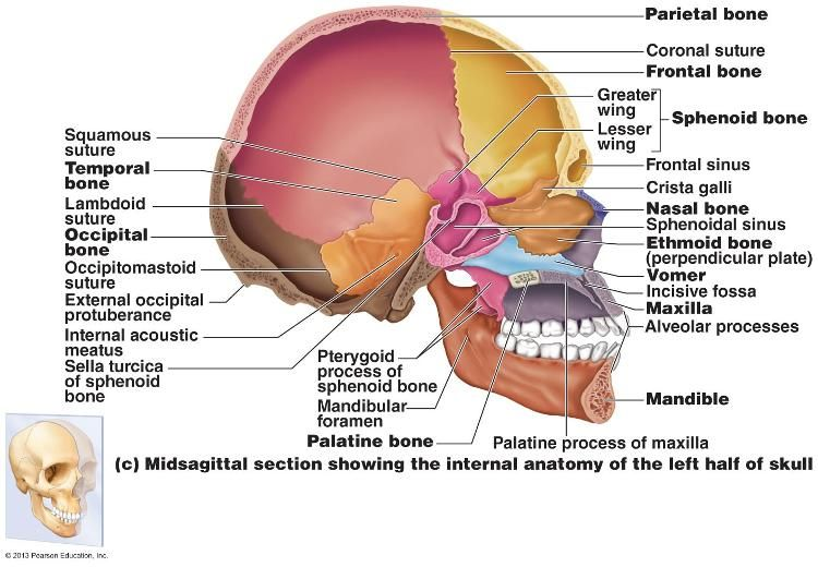 Midsagittal Skull Bone Diagram Wiring Diagram Data Nl