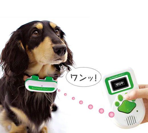 Wild Animal Weird Toys Dog Animals Zone Animals Pictures Unusual