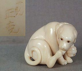 Netsuke DOG with bell by SEIKOKU ex Meredith // Ivory netsuke of a seated dog licking its hind paw and wearing a cloth collar with a bell on it. Superb quality carving - see its face and body bulk. Good compact shape, cord hole is formed by is left hind leg, very beautiful even grained ivory, remarkable patina. Eyes are double inlaid with light and dark horn, signed IKKO SEIKOKU by its tail.