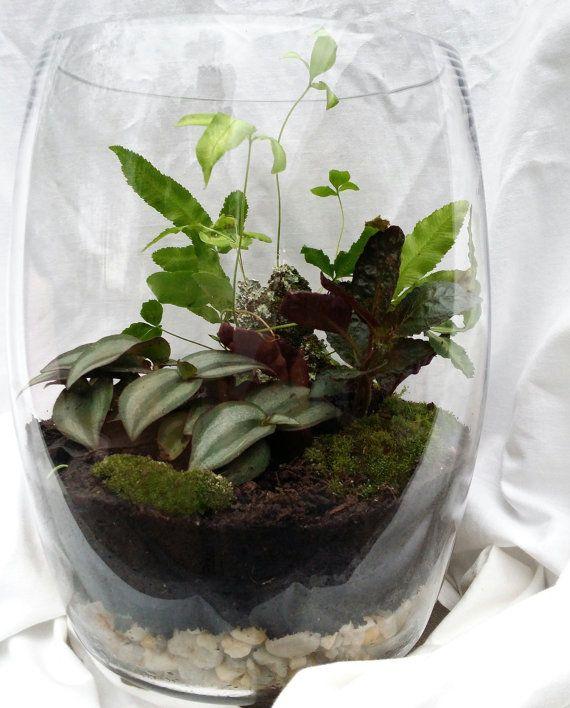large simple and elegant living plant fern and moss glass vase terrarium local pickup. Black Bedroom Furniture Sets. Home Design Ideas