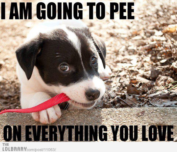 Memes for Men pt.7 Puppy meme, Cute puppies, Dog pee