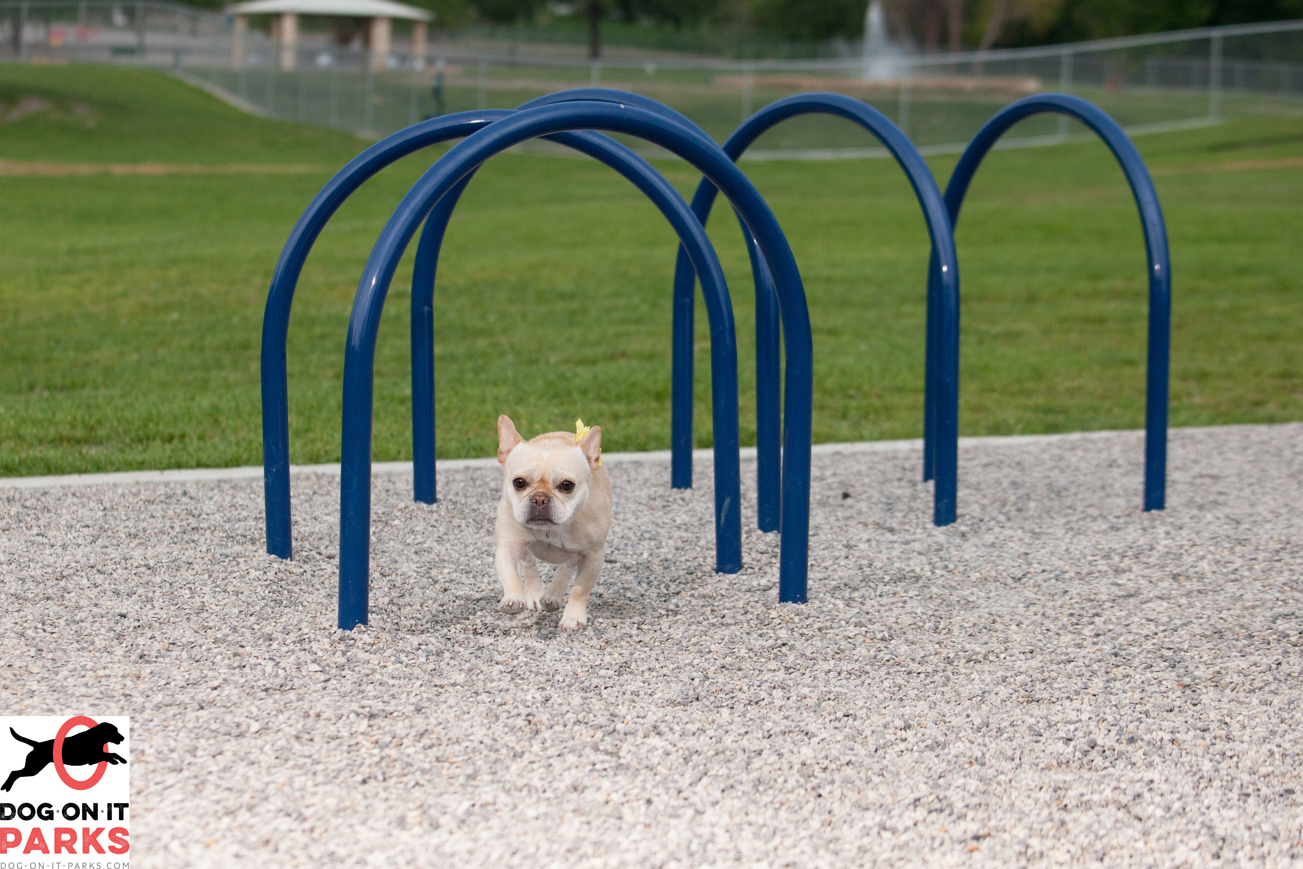 Hound Hoops Similar To Our Popular Tunnels But More Challenging Due To The Open Design Your Pup Can Also Practice Weaving Around Dog Park Hound Dog Agility