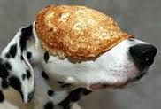 """""""Pongo was pretty sure this would go down as an unsuccessful attempt at pancake day"""""""