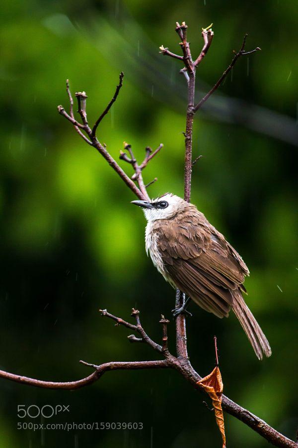 It's a bird by aljw via http://ift.tt/1sJGGcY