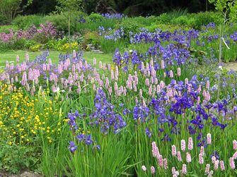 perennials | mehrjährige pflanzen | pinterest | mehrjährige, Garten Ideen