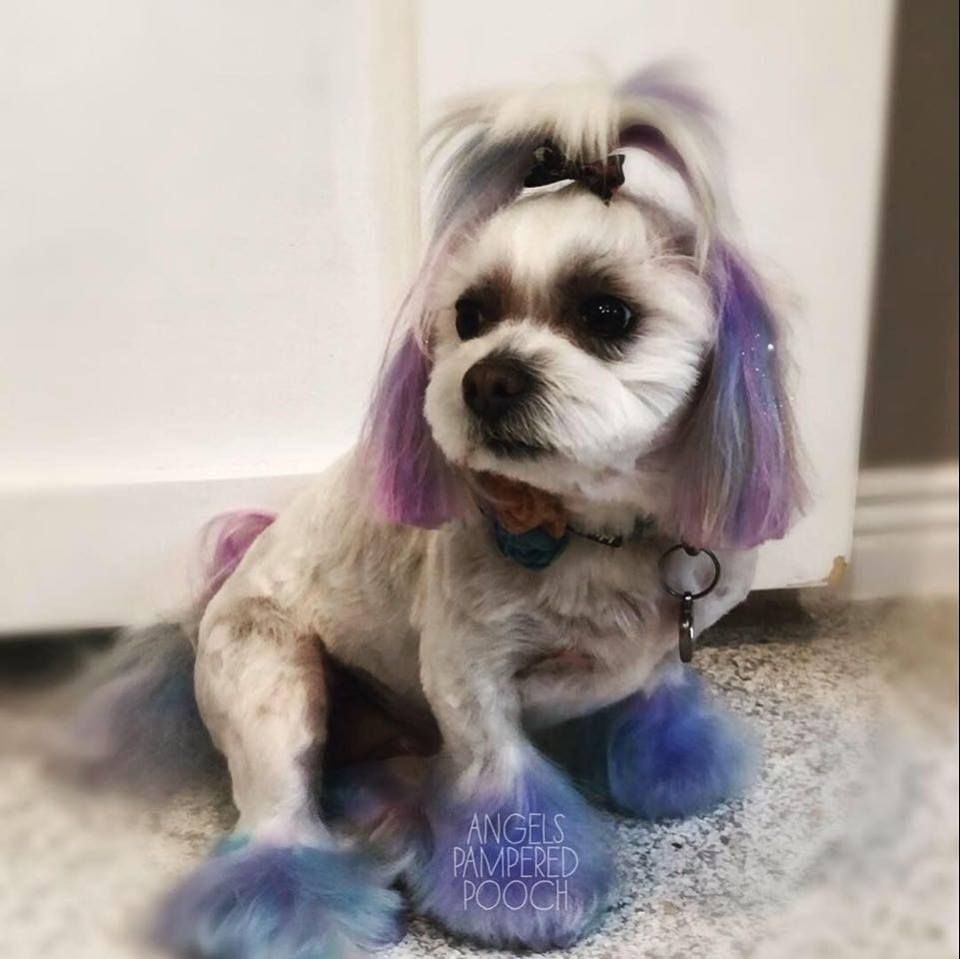 Angel Lopez Worked With A Mix Of Opawz Semi Permanent Colors And Opawz Temporary Colors To Create This Adorable Coloring Resu Pet Groomers Luxury Pet Grooming