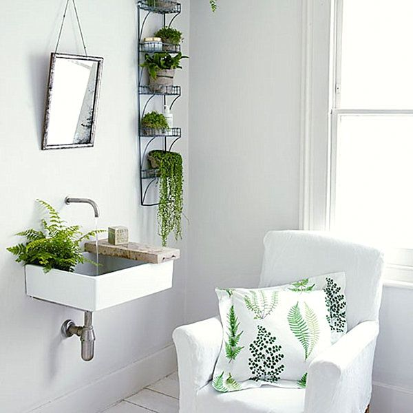 Plants For Bathrooms Green Ferns In A White Bathroom  Fern Bathroom Plants And Plants