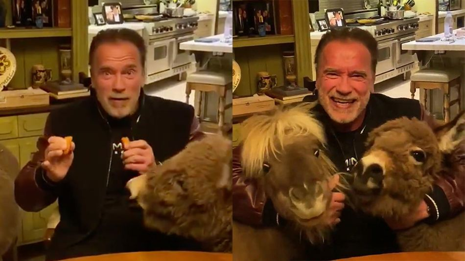 Arnold Schwarzenegger Is Self Isolating With His Tiny Pet Donkey And Horse That S It In 2020 Pet Donkey Cute Creatures Pets