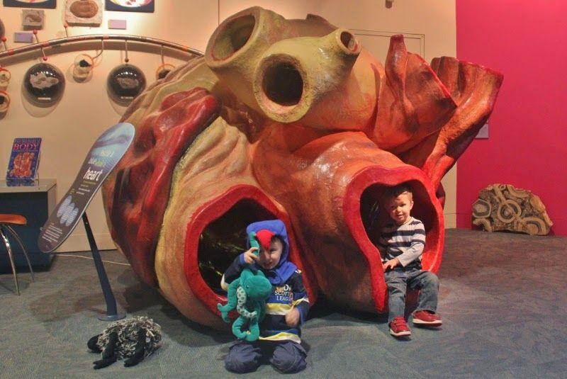 صور قلب الحوت الأزرق صور و فيديو العلوم سبيلنا Painting Art Lion Sculpture