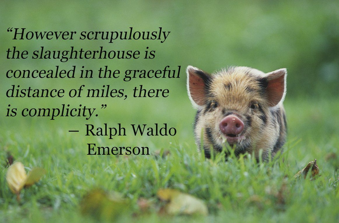 Vegan Quotes 8 Amazing Quotes That Might Just Convert You To Vegetarianism