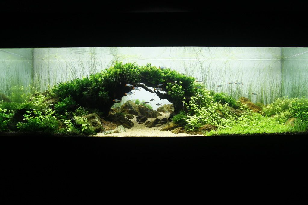Pin By Jp Murphy On Aquascaping Aquascape Design Aquascape Aquarium Landscape