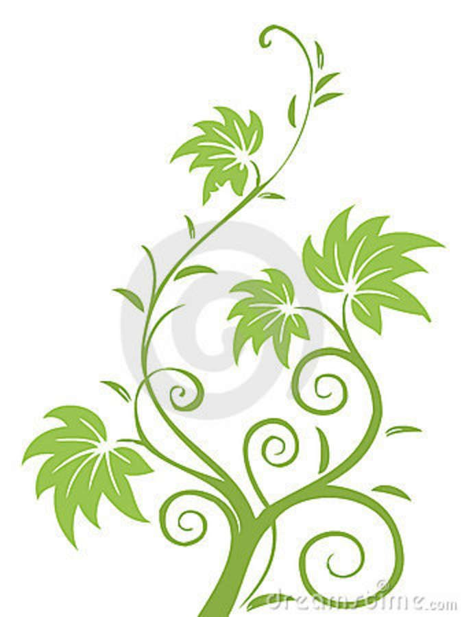 Drawings Of Flowers Leaves And Vines Illustration Drawing Of