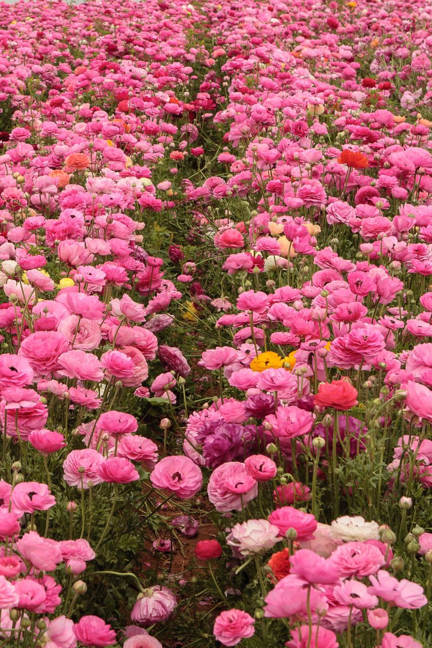All the Pretty Flowers | ZsaZsa Bellagio - Like No Other | BEAUTIFUL ...