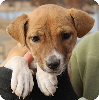 Chicago, IL Mix. Meet Samantha a Puppy for